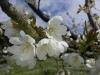 C\'est le printemps...