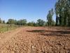 Plantation 2014