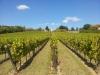 La vigne peut attendre l\'automne...