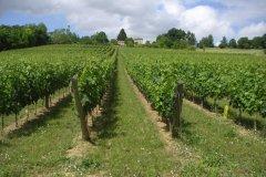 Le développement de la vigne
